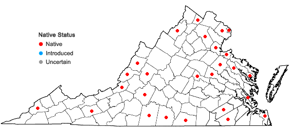 Locations ofCarex muehlenbergii Schk. ex Willd. var. muehlenbergii in Virginia