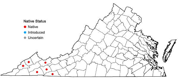 Locations ofCarex ruthii Mackenzie in Britton in Virginia