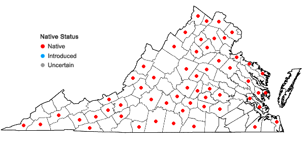 Locations ofCarya ovalis (Wangenh.) Sarg. in Virginia
