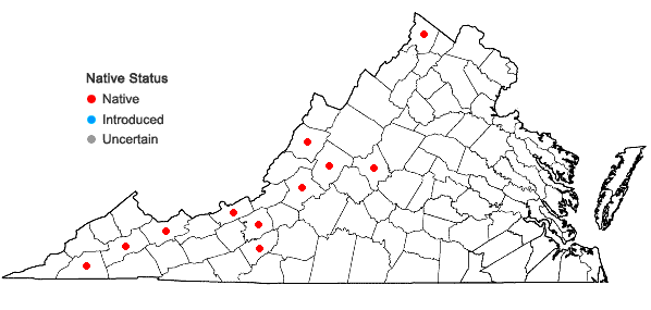 Locations ofCaulophyllum giganteum (Farw.) Loconte & Blackwell in Virginia