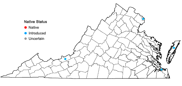 Locations ofCentaurium erythraea Raf. in Virginia