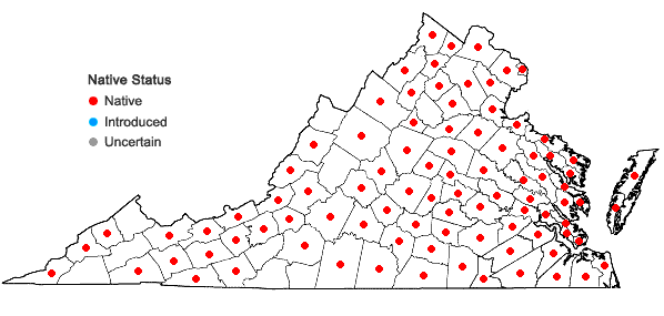 Locations ofCephalanthus occidentalis L. in Virginia
