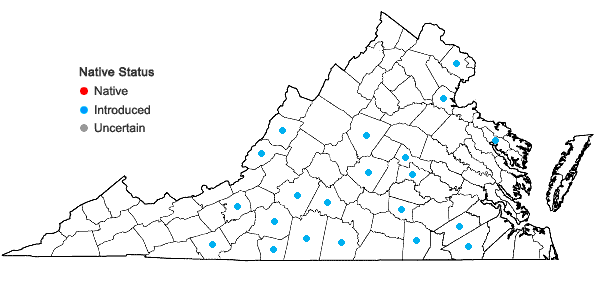 Locations ofCerastium brachypetalum Pers. in Virginia