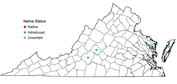 Locations ofChaenomeles japonica (Thunb.) Lindl. in Virginia