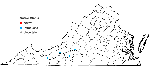 Locations ofChaenomeles speciosa (Sweet) Nakai in Virginia