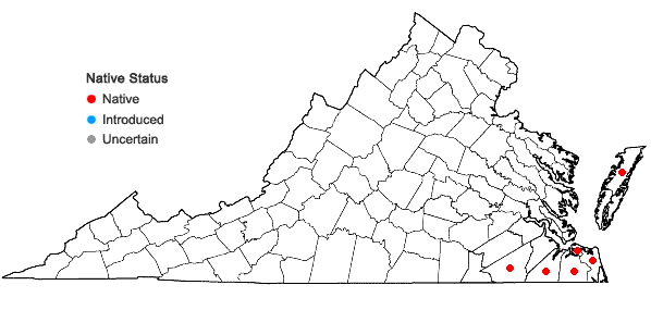 Locations ofChamaecyparis thyoides (L.) BSP in Virginia