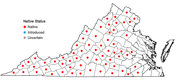Locations ofChamaelirium luteum (L.) Gray in Virginia