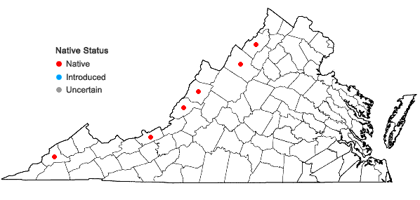 Locations ofChenopodium foggii Wahl in Virginia