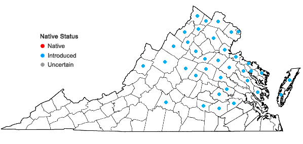 Locations ofChondrilla juncea L. in Virginia