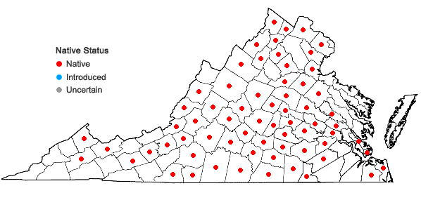Locations ofChrysogonum virginianum L. var. virginianum in Virginia