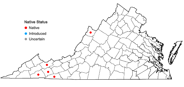 Locations ofCinna latifolia (Trev. ex Goepp.) Griseb. in Virginia