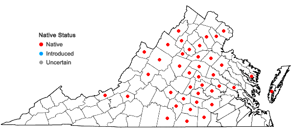 Locations ofCirsium pumilum (Nutt.) Spreng. in Virginia