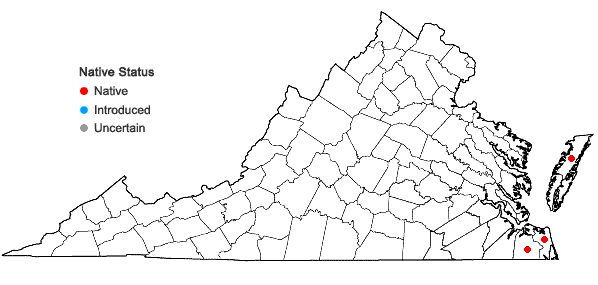 Locations ofCladium jamaicense Crantz in Virginia