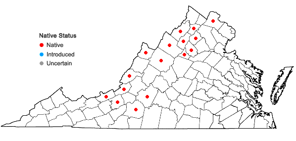 Locations ofClematis occidentalis (Hornemann) DC. var. occidentalis in Virginia