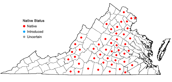 Locations ofClematis ochroleuca Ait. in Virginia