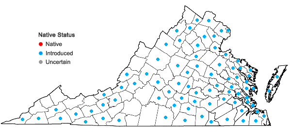 Locations ofClematis terniflora DC. in Virginia