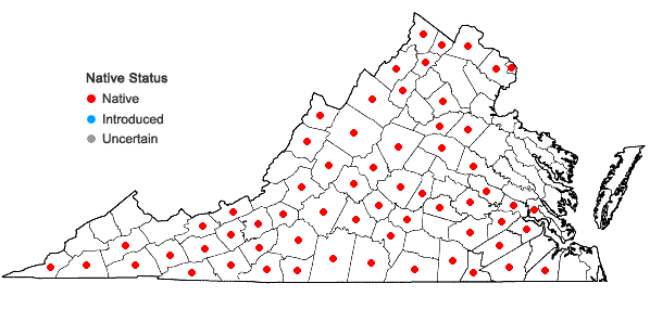 Locations ofClematis viorna L. in Virginia