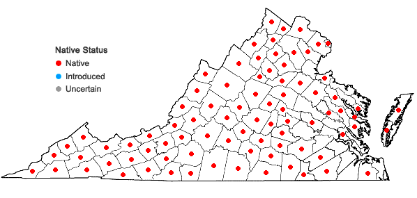 Locations ofClematis virginiana L. in Virginia