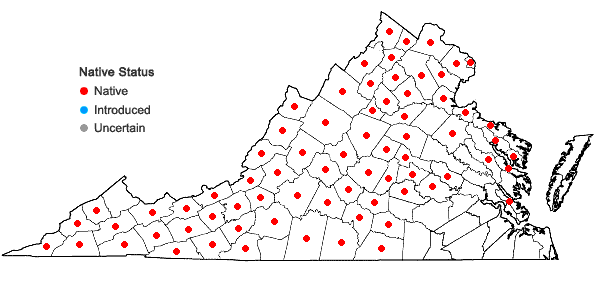 Locations ofClinopodium vulgare L. in Virginia