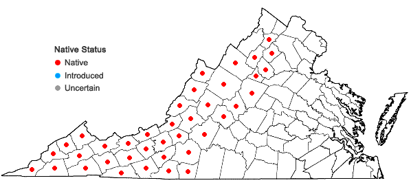Locations ofClintonia umbellulata (Michx.) Morong in Virginia