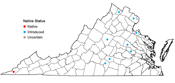Locations ofCocculus carolinus (L.) DC in Virginia