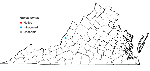 Locations ofCoincya monensis (L.) Greuter & Burdet ssp. recurvata (Allioni) Leadlay in Virginia