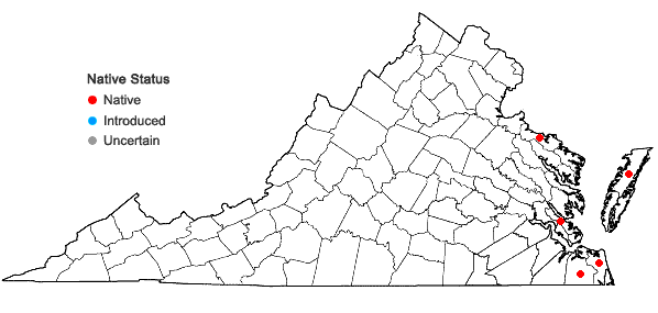 Locations ofCololejeunea cardiocarpa (Mont.) A. Evans in Virginia