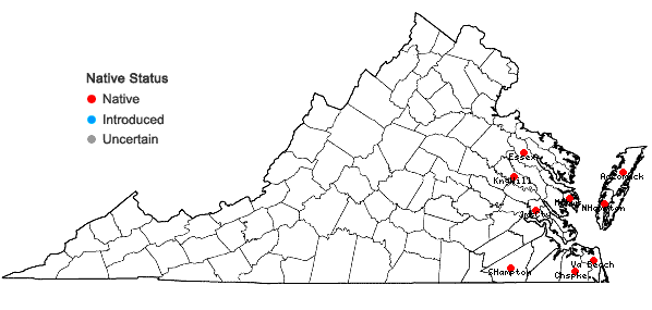 Locations ofCololejeunea minutissima (Sm.) Schiffn. in Virginia