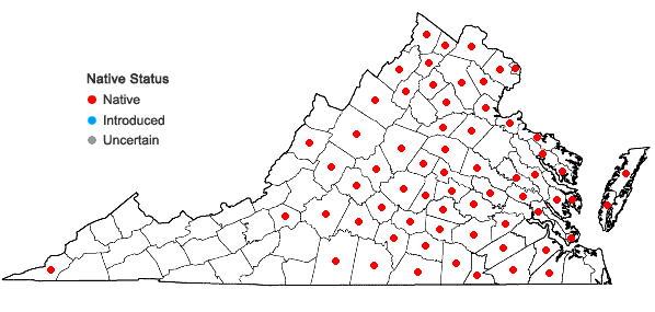 Locations ofComandra umbellata (L.) Nuttall var. umbellata in Virginia