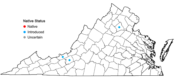 Locations ofConringia orientalis (Linnaeus) Andrzejowski in Virginia