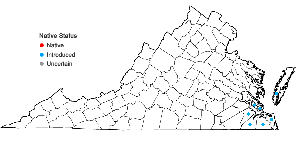 Locations ofConyza bonariensis (L.) Cronq. in Virginia