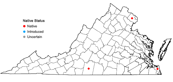 Locations ofCrataegus berberifolia Torr. & Gray in Virginia