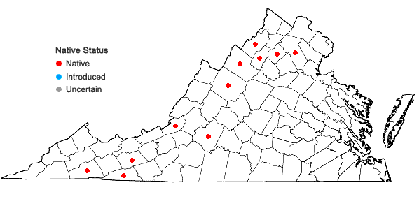 Locations ofCrataegus chrysocarpa Ashe var. dodgei (Ashe) Palmer in Virginia