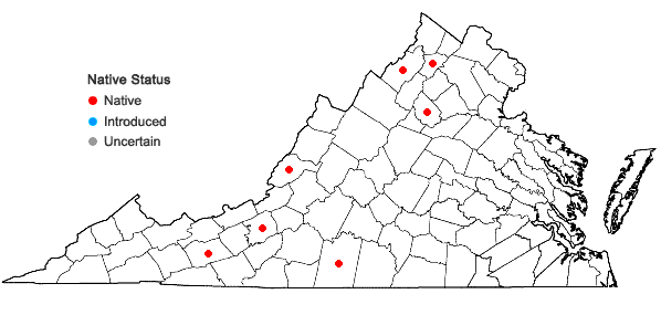 Locations ofCrataegus intricata Lange var. straminea (Beadle) E.J. Palmer in Virginia