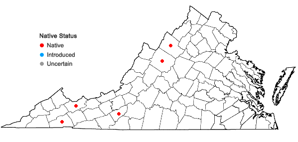 Locations ofCrataegus macracantha Lodd. in Virginia
