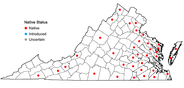 Locations ofCrocanthemum canadense (L.) Britton in Virginia