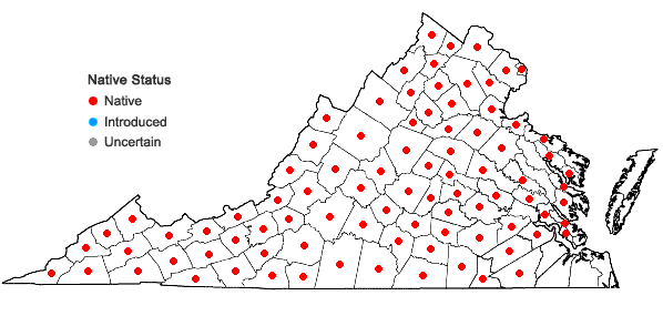 Locations ofCryptotaenia canadensis (L.) DC. in Virginia