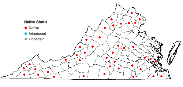 Locations ofCtenidium molluscum (Hedw.) Mitt. in Virginia