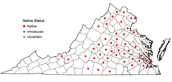 Locations ofCynanchum laeve (Michx.) Pers. in Virginia