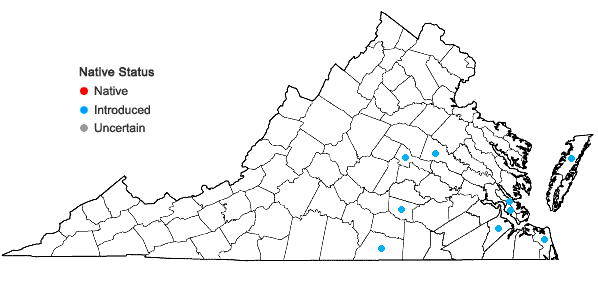 Locations ofCynosurus echinatus L. in Virginia