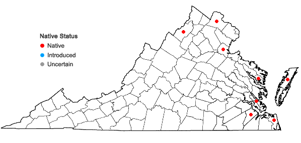 Locations ofCyperus diandrus Torrey in Virginia