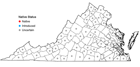 Locations ofCyperus esculentus L. var. leptostachyus Böckler in Virginia