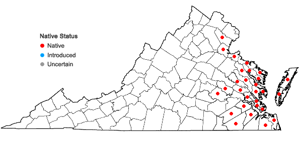 Locations ofCyperus filicinus Vahl. in Virginia