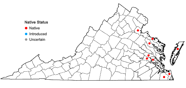Locations ofCyperus haspan L. in Virginia