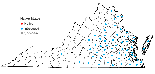 Locations ofCyperus iria L. in Virginia