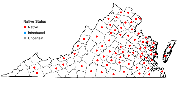 Locations ofCyperus lupulinus complex in Virginia