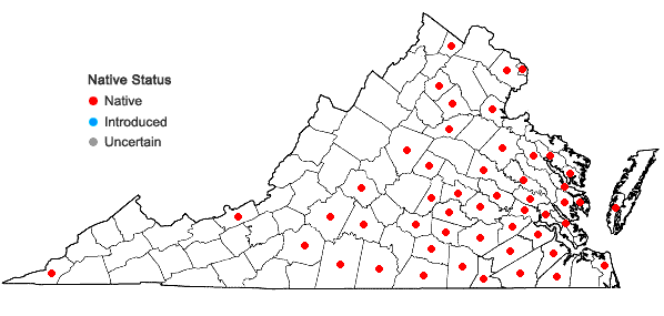 Locations ofCyperus retrofractus (L.) Torrey in Virginia