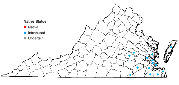 Locations ofCyperus rotundus L. in Virginia