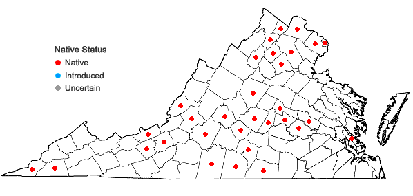 Locations ofCyperus squarrosus L. in Virginia