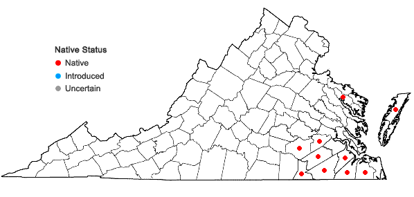 Locations ofCyrilla racemiflora L. in Virginia